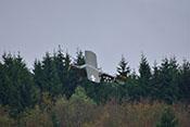 Nachbau einer Piper L-4 '480091' im Tiefflug